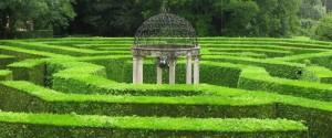 Živo mejo iz cipres se da zelo lepo oblikovati po naših željah, zato se jih pogosto uporabi za labirinte.